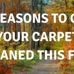 5 Reasons to get your carpet cleaned this