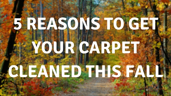 5 Reasons to Get Your Carpet Cleaned This Fall